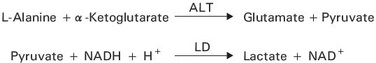 Alanine Aminotransferase (ALT) Principle of the Method