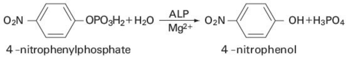 Alkaline Phosphatase (ALP) Principle of the Method
