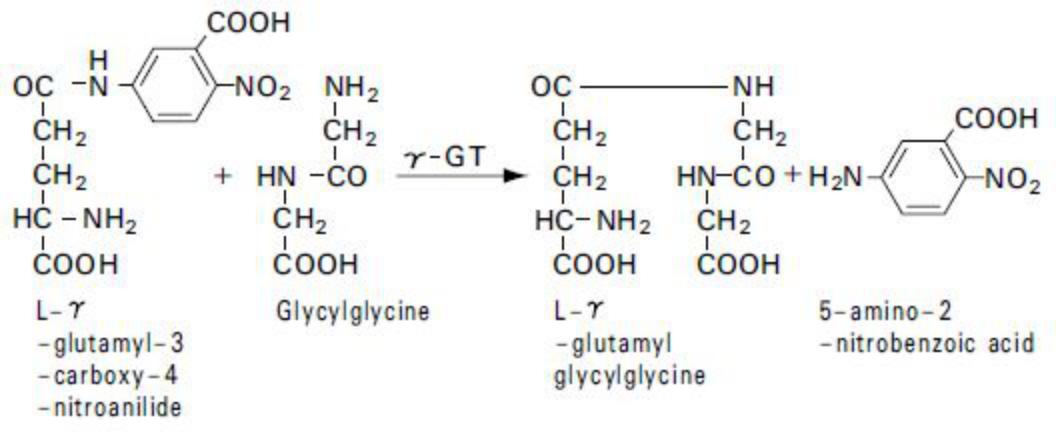 γ-glutamyl transpeptidase (γ-GT) Principle of the Method