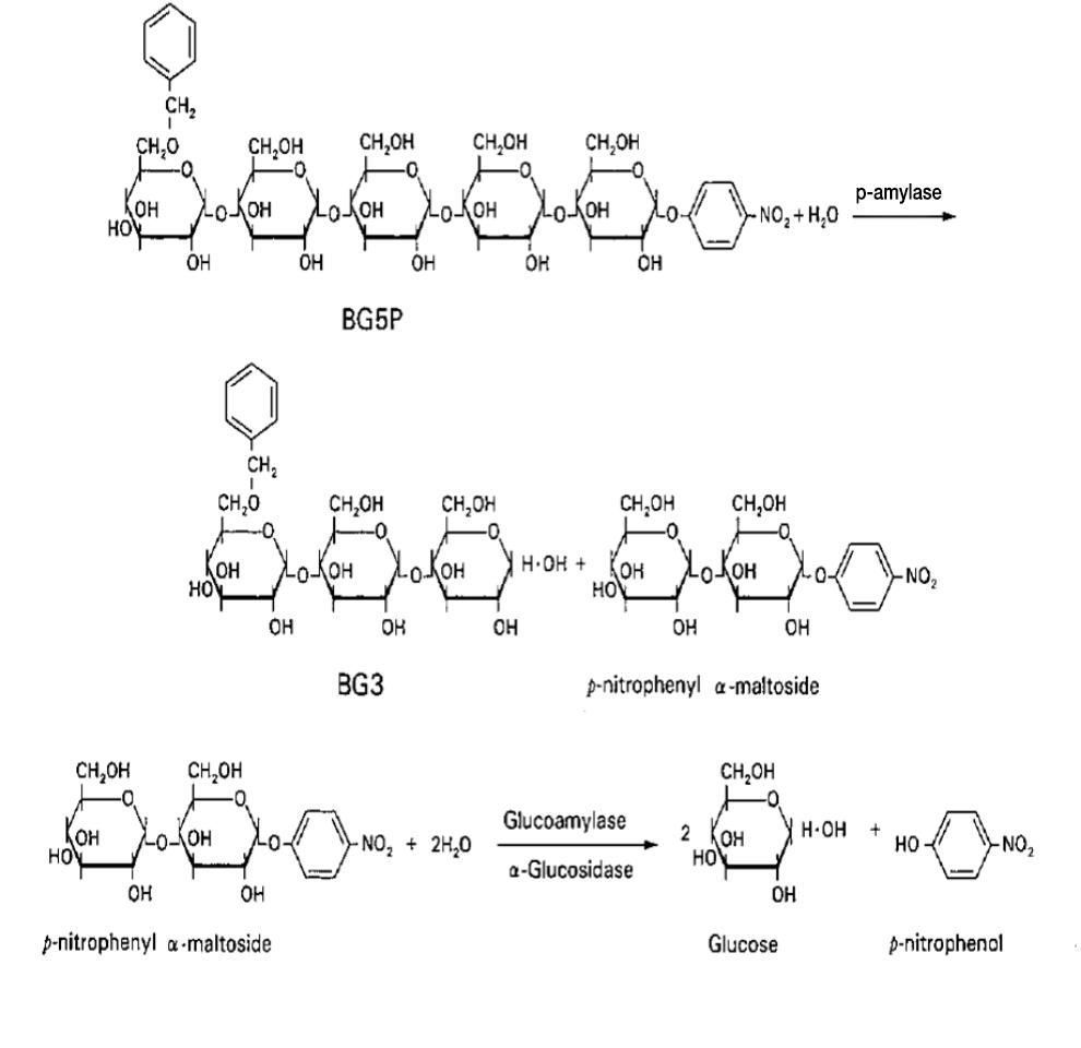 Pancreatic Amylase (P-AMY) Principle of the Method