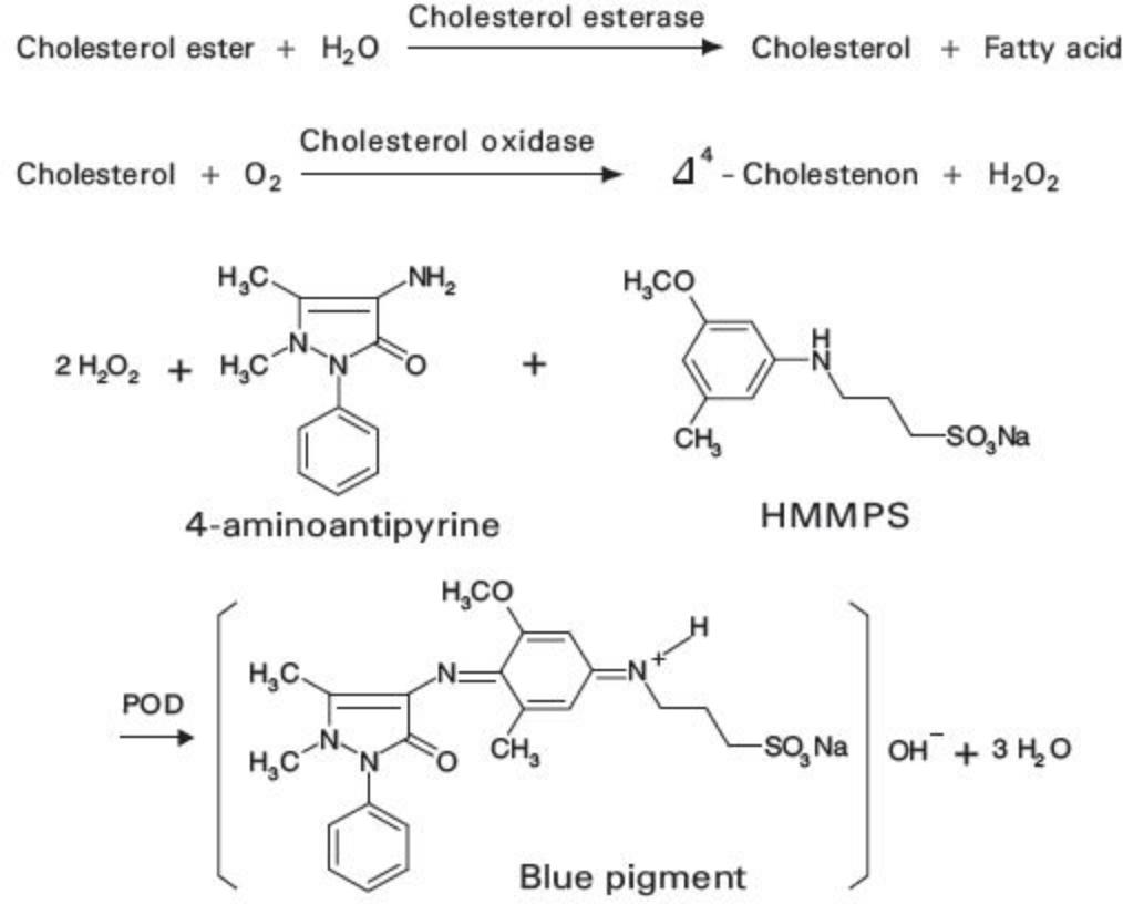 Total Cholesterol (T-Cho) Principle of the Method