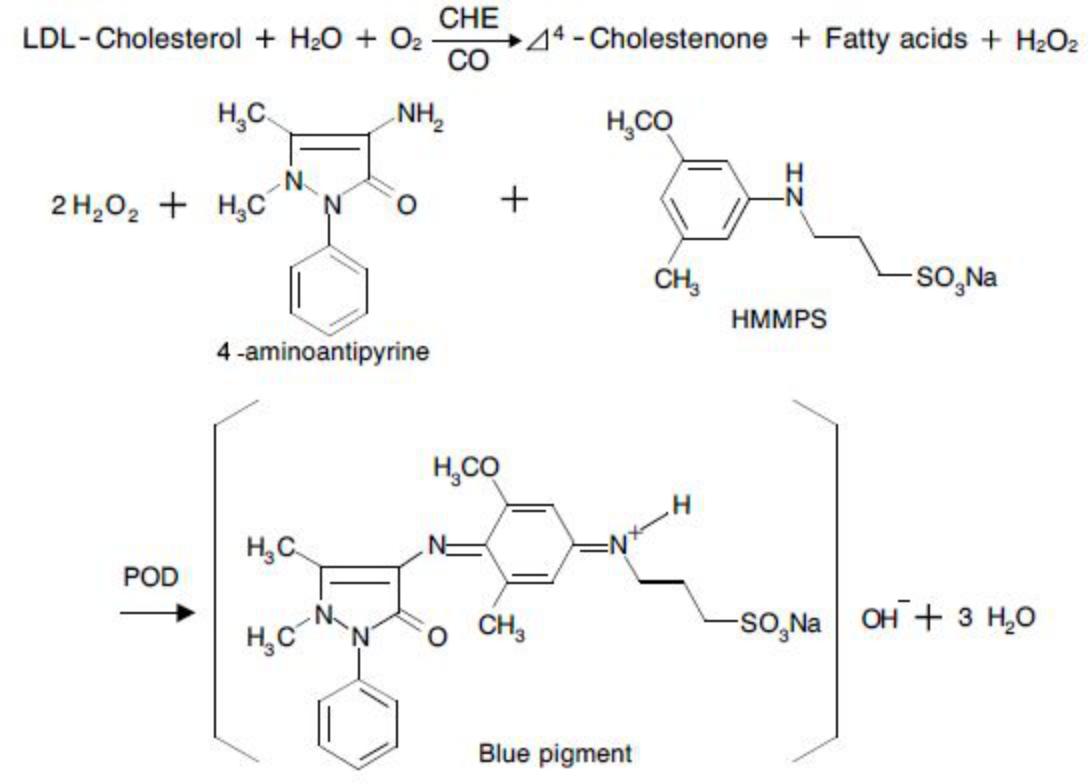 LDL Cholesterol (LDL-C) Principle of the Method