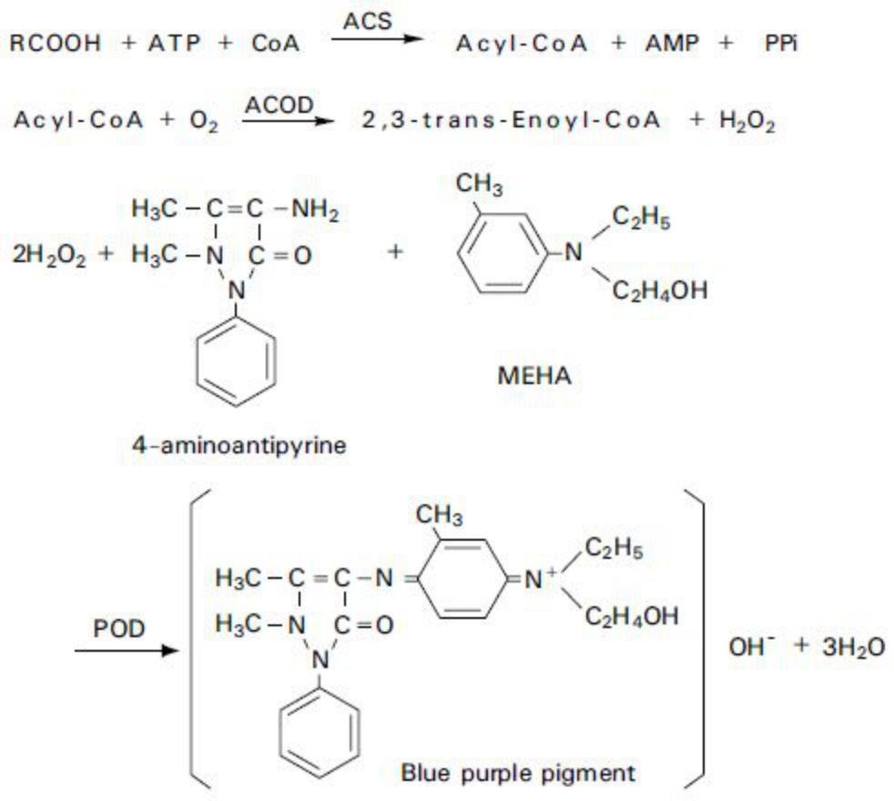 Non-esterified fatty acids (NEFA) Principle of the Method