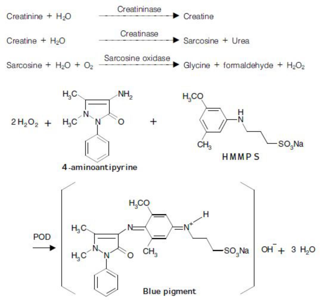 Creatinine (CRE) Principle of the Method
