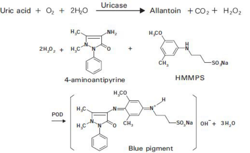 Uric Acid (UA) Principle of the Method